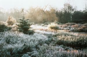 Prepare-Garden-Winter