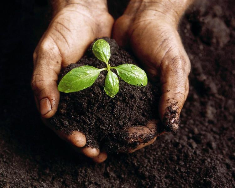 Making organic compost advice tips bury hill topsoil blog for Organic compost soil