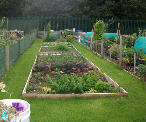 allotment planning tips | allotments for beginners | bury hill blog