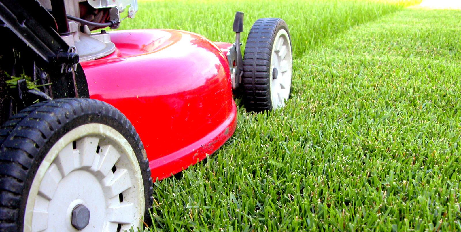Lawn Garden Services : How to care for your lawn turf gardening bury