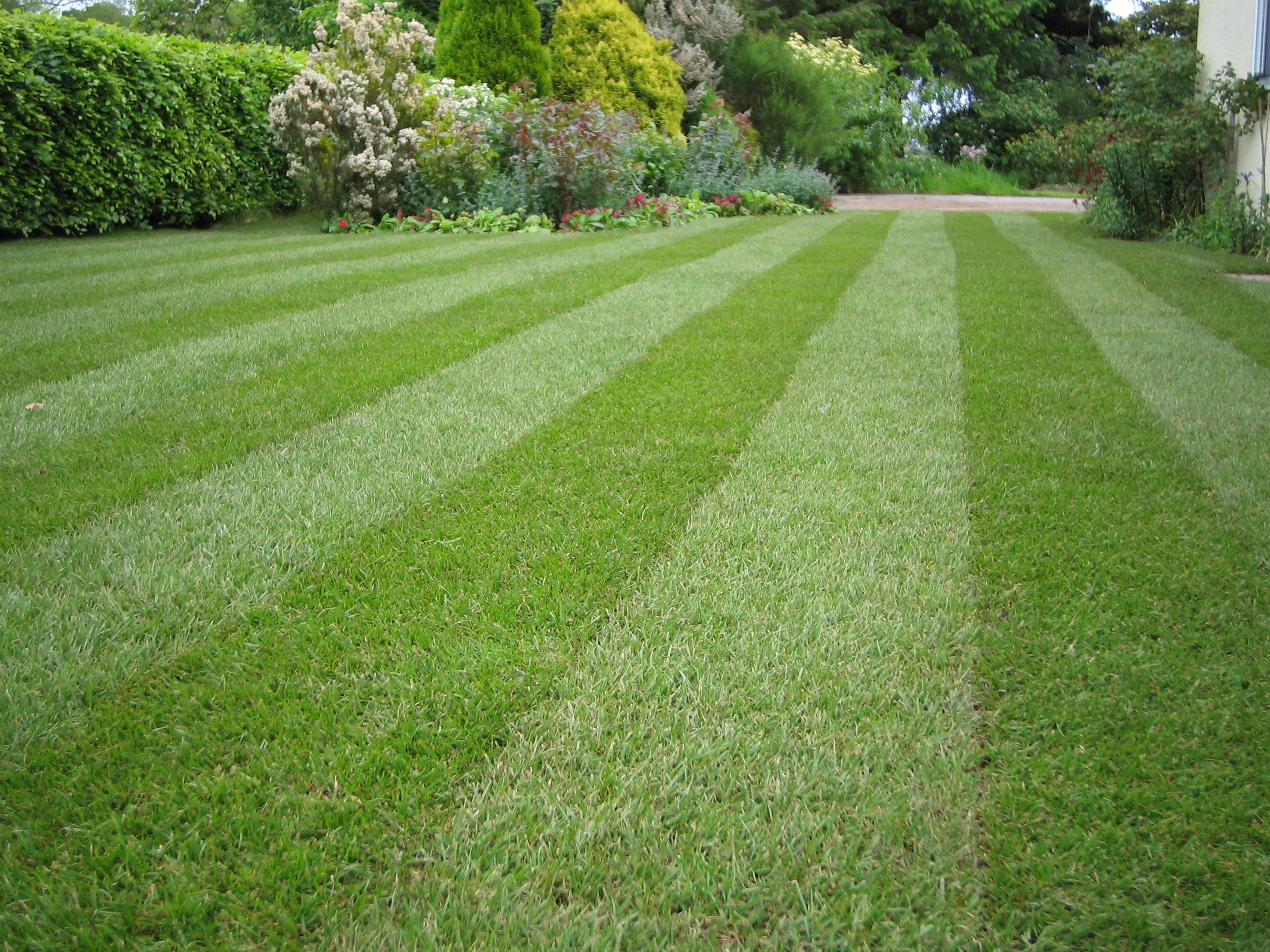 How to care for your lawn turf gardening blog bury Yard and garden