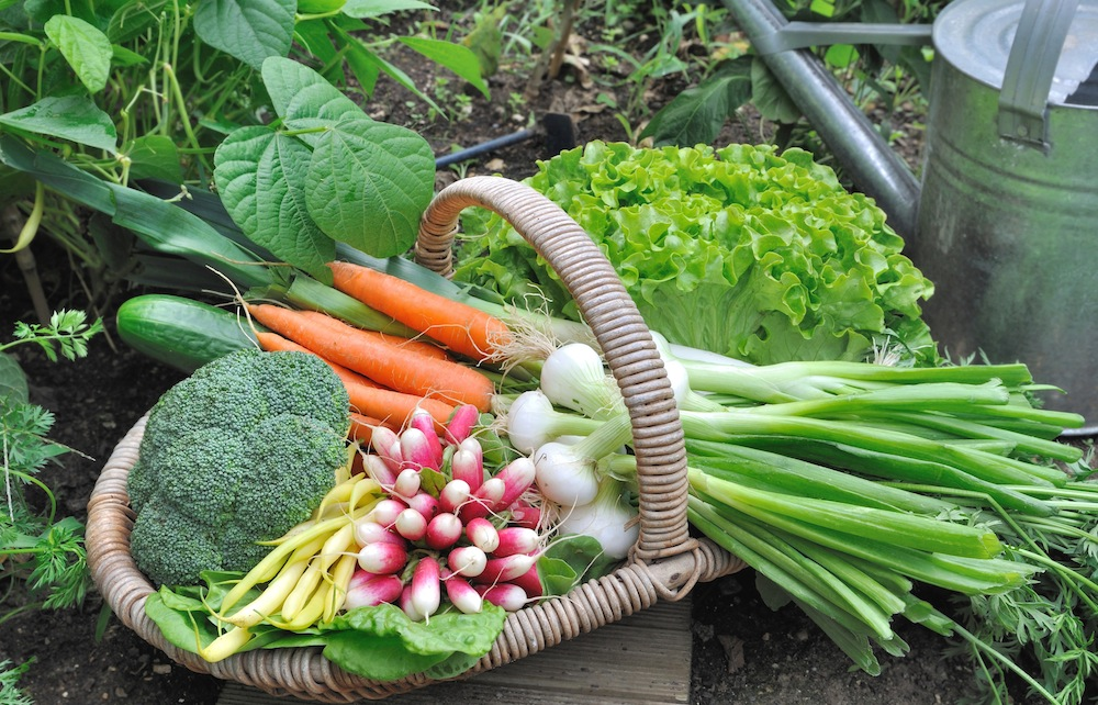 How To Start Your Own Vegetable Patch Bury Hill Topsoil Blog
