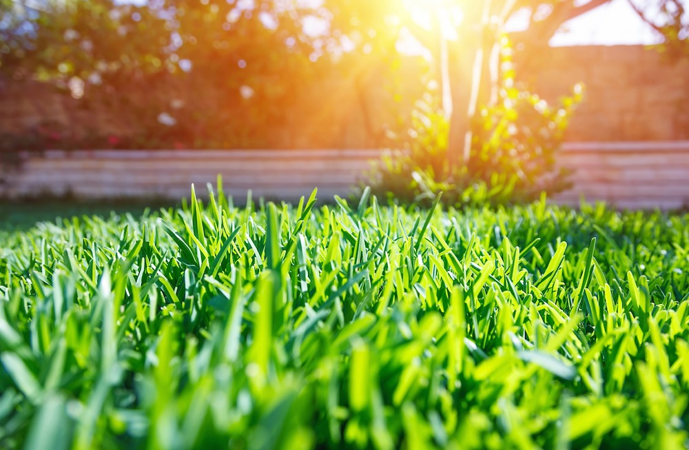 Lawn Care Tips and Planting Grass Seed