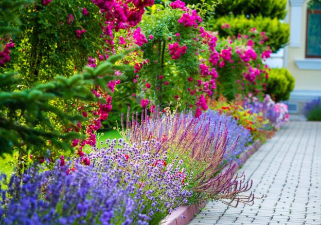 summer-gardening-tips