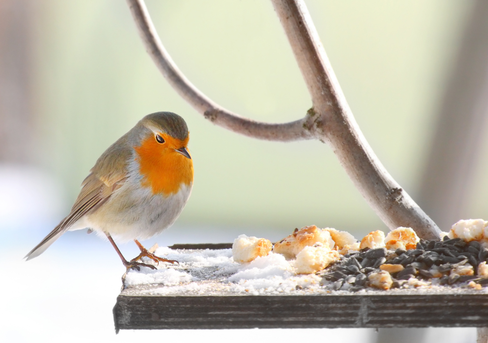 Use your garden this winter - bird feeding